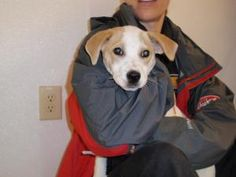 Noel is an adoptable Terrier Dog in Dahlonega, GA. Noel is a 12 week old terrier mix we pulled from Hall county. She is all play and is getting over a little cough. When she's finished with her medici...