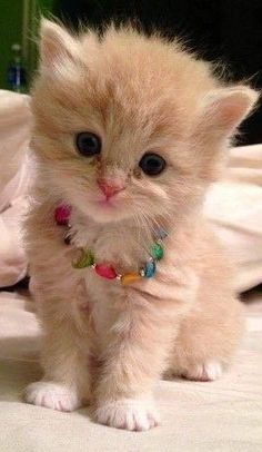 Trendy ideas for cats wallpaper cute kittens Cute Kittens, Cute Baby Cats, Cute Little Animals, Cute Funny Animals, Kittens Meowing, Fluffy Kittens, Kittens Cutest Baby, Ragdoll Kittens, Funny Animal Pictures