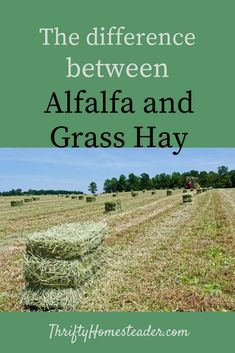 Keeping Goats, Raising Goats, Raising Cattle, Cattle Farming, Goat Farming, Alfalfa Hay, Horse Hay, Beef Cattle, Horses