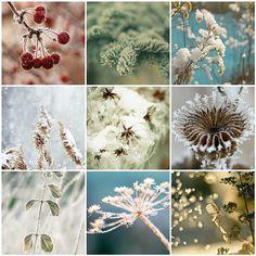 frosty