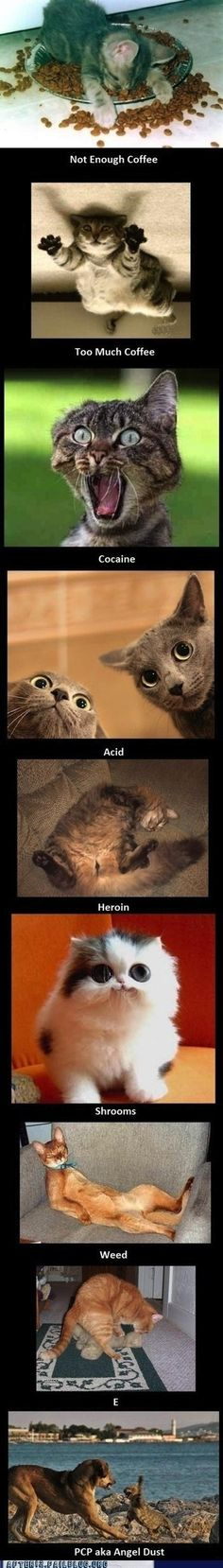 cats on drugs (don't approve of certain drugs but this is really funny)