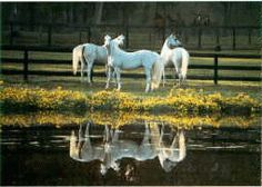 Ocala, Florida, beautiful horse country.  My brother lived in Dunnellon and worked at Crystal River.