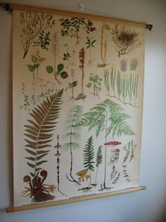 Vintage 40s Swedish School Botanical Chart