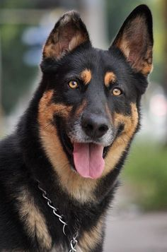 German Shepherd Rescue, Belgian Shepherd, German Shepherds, Dogs And Puppies, Doggies, Bow Wow, Dog Photography, Mans Best Friend, Dog Life