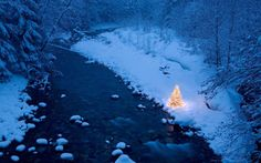 Illuminated Christmas tree beside a creek in a snow covered forest at dusk, Cascade Mountains, Washington, USA (by joseph.vernagallo)