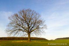 #Eiche im Winterkleid / © wildeschoenheiten.wordpress.com