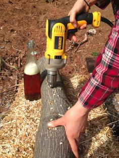 Indoor Vegetable Gardening Drilling log for growing mushrooms - How to grow specialty mushrooms like shiitake, oyster, and wine cap in your backyard. It's easier than you think to grow mushrooms on hardwood. Grow Your Own Mushrooms, Growing Mushrooms At Home, Mushroom Grow Kit, Garden Mushrooms, Edible Mushrooms, Stuffed Mushrooms, Wild Mushrooms, Mushroom Guide, Mushroom Spores