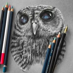 Owl realistic pencil drawing by Jonathan Martinez http://webneel.com/25-beautiful-color-pencil-drawings-valentina-zou-and-drawing-tips-beginners   Design Inspiration http://webneel.com   Follow us www.pinterest.com/webneel