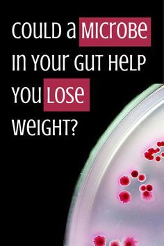Could a Microbe in Your Gut Help You Lose Weight? Could a Microbe in Your Gut Help You Lose Weight? One bacteria is linked to lower levels of blood sugar, insulin and fat, researchers say. Health Facts, Health Diet, Health Fitness, Medical News, Medical Research, Lose Weight Fast Diet, Weight Loss, Gut Feeling, Alternative Health