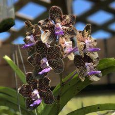 Just another day in paradise. #orchid #orchidlover #flower #flowers #garden #mygarden #inbloom #bloom #pretty #gorgeous #flowerstagram #nature #picoftheday #rainbowsendgarden #florida #southflorida #floridalife #gardening #gardenlife #life #enjoy #love #thankful #photography #orchids #photoshoot #joy