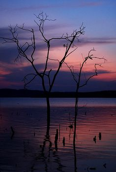 Black tree by Yan Boechat, via Flickr - Sunset at Tocantins River, north of Brazil