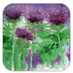 Really colorful, really nice, really Scottish! Set of six coasters with a lovely watercolor painting of the classic Scottish thistle.