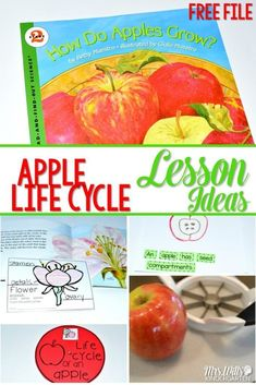 Apple Life Cycle Les