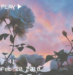 M O O N V E I N S 1 0 1 #vhs #aesthetic #sunset #rose #sky #clouds #pink #thorns