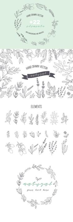 HAND DRAWN NATURAL HERB&LEAF VECTOR by beerjunk on @creativemarket