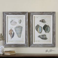 Vintage shell studies framed in light gray-washed distressed wooden frames with off-white linen liners.