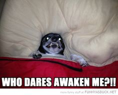 I regret watching that horror movie - Memes Comix Funny Pix Funny Animal Pictures, Funny Photos, Funny Animals, Cute Animals, Scary Photos, Animal Funnies, Animal Memes, Animal Pics, Dog Photos