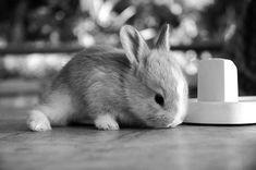 black and white animal photography | animal, black and white, cute, fofo, photography - image #457312 on ...