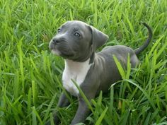 I'm partial to pitties