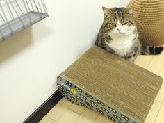 """Buy me a new scratching post now. Turning the old one upside down isn't the answer. ^^"""""""