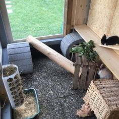 Important: The absolute minimum dimensions are: For 2 rabbits: floor space + many hours of exercise every day or floor space with less … Rabbit Enclosure, Reptile Enclosure, Reptile Cage, Cute Reptiles, Les Reptiles, Bunny Cages, Rabbit Cages, Pet Food Storage, Pet Fish