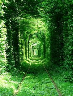 "beautiful train tunnel of trees - ""The Tunnel of Love"" - Kleven, Ukraine. ""The tunnel is very popular among lovers, who like to make a wish and kiss there."""