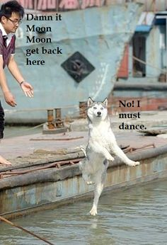 SkunkWire brings you cute and funny animal pictures every day. We got funny cats and cute dogs, plus lots of other funny animal pictures Funny Animal Jokes, Funny Dog Memes, Cute Funny Animals, Animal Memes, Funny Cute, Funny Dogs, Cute Dogs, Memes Humor, Funny Captions