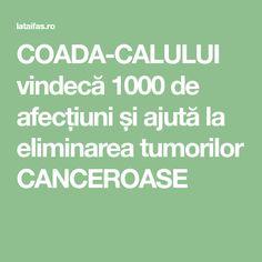 COADA-CALULUI vindecă 1000 de afecțiuni și ajută la eliminarea tumorilor CANCEROASE Salvia, How To Get Rid, Metabolism, Good To Know, Health And Beauty, Health Fitness, Cancer, Yoga, Healthy