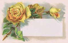 free vintage postcard ~ beautiful yellow roses – Famous Last Words Vintage Greeting Cards, Vintage Ephemera, Vintage Postcards, Vintage Images, Vintage Paper, Molduras Vintage, Button Cards, Vintage Roses, Vintage Yellow