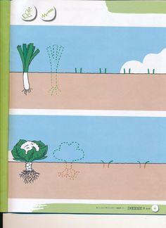 Le secret du potager   Maternelle Theme 1 Le potager/les légumes ...