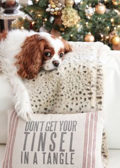 Our Holiday Décor Revealed- don't get your tinsel in a tangle, cavalier king charles spaniel