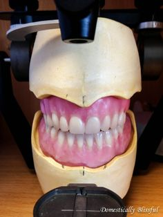 Dental School Year Two - Our experience of his second year of dental school…