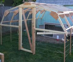 Hillsboro, Oregon chicken coop with Rhode Island Red, resident cat - Queen Bee Coupons & Savings