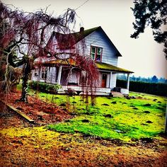 """""""Oregon Hostel"""" .... In this haunted house turned hostel in 1986 there were unspeakable murders that took place. 9,851 European and South American young backpackers were brutally slaughtered and fed to the owners cat, Binky. Then Binky killed several dogs and cattle before hanging himself in this tree. The cycle of life/death is felt by the local spirits of Oregon."""