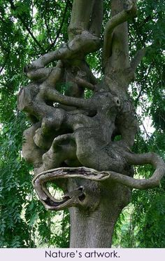 Nature's humor. -m- WHY DO TREES DO THIS? Its interesting to me