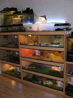 reptile room Reptile roomYou can find Reptile enclosure and more on our website Reptile House, Reptile Habitat, Reptile Room, Reptile Cage, Reptile Tanks, Reptile Rescue, Bearded Dragon Cage, Bearded Dragon Habitat, Animal Room