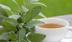 Salie: een Godsgeschenk voor je lichaam | Salie | Salvia officinalis
