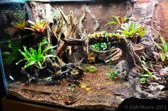 180 Gallon viv build plus two 20 gal verts :) - Page 10 - Dendroboard Reptile Habitat, Reptile House, Reptile Room, Reptile Cage, Gecko Terrarium, Aquarium Terrarium, Terrarium Plants, Vivarium, Frog Tank