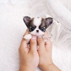 OMG SO TINY  #photooftheday #tagforlikes #dog
