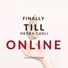 We are happy to announce that our new e-commerce website is finally online! We can't believe we made it!  Our hugest thanks goes to Enrico for his 99 hours dedicated patiently to TillHerbaCaeli. Thanks also to Gabriele Di Stefano for the pictures he took.