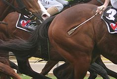 """It's official: Using a whip on a racehorse isn't just cruel; A new study shows: """"The highest speeds in these horses were achieved when they weren't being whipped"""" All About Horses, Stop Animal Cruelty, Animal Protection, Dark Horse, Cute Funny Animals, Animal Rights, My Ride, Horse Riding, Beautiful Horses"""