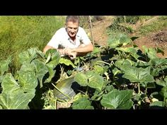 The organic vegetable garden mid September Hotel Posada del Valle  Asturias
