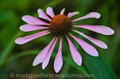 Aus meinem Garten: August