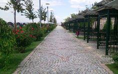 Ankara 50. Yıl Parkı gezi yolu ve kamelyalar resmi