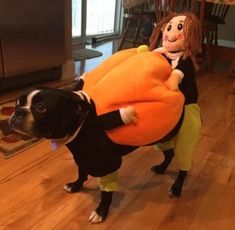 2019 Halloween Most popular Pumpkin Costume for Pets Features: Fantastic for parties and photos Velvet material keeps your dog warm Cute, comfortable and funny Dog clothes size chart Product information It's that time of year again! Chien Halloween, Pumpkin Halloween Costume, Pet Halloween Costumes, Pet Costumes, Animals And Pets, Funny Animals, Cute Animals, Costume Chien, Dog Pumpkin