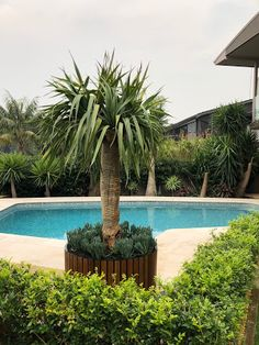 Recently we shared this pool project from the team at Endless Landscapes in Cronulla NSW. Swimming Pools, Spa, Australia, Landscape, Outdoor Decor, Plants, Swiming Pool, Pools, Scenery