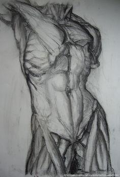 Human Anatomy Drawing, Human Figure Drawing, Figure Sketching, Body Drawing, Life Drawing, Body Sketches, Anatomy Sketches, Art Drawings Sketches Simple, Art Poses