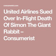 United Airlines Sued Over In-Flight Death Of Simon The Giant Rabbit – Consumerist