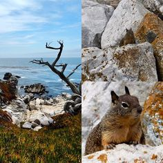 Heaving a #goodtime at #PebbleBeach #california, shooting #squirrels #onthebeach with my #photocamera 📷 🐿 #montereylocals #pebblebeachlocals - posted by PiksyPerfekt 🇳🇱 📷 Samsung NX1 https://www.instagram.com/fred.piksyperfekt. See more of Pebble Beach at http://pebblebeachlocals.com/