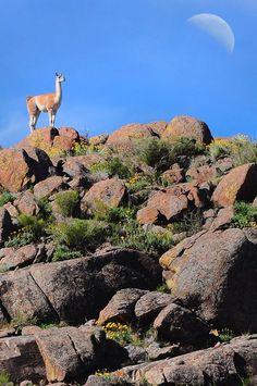 Parque Nacional Lihué Calel. Argentina